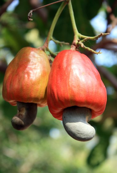 Buy Cashew Online India