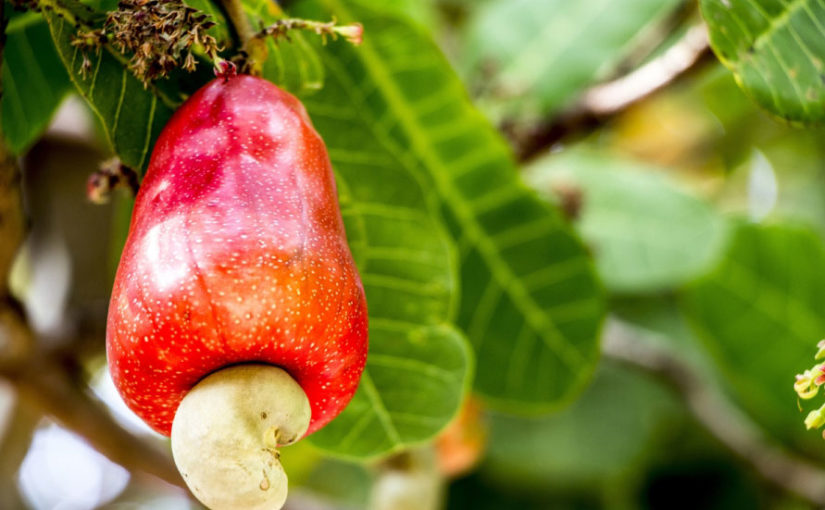 Buy Cashew Nuts Online in India